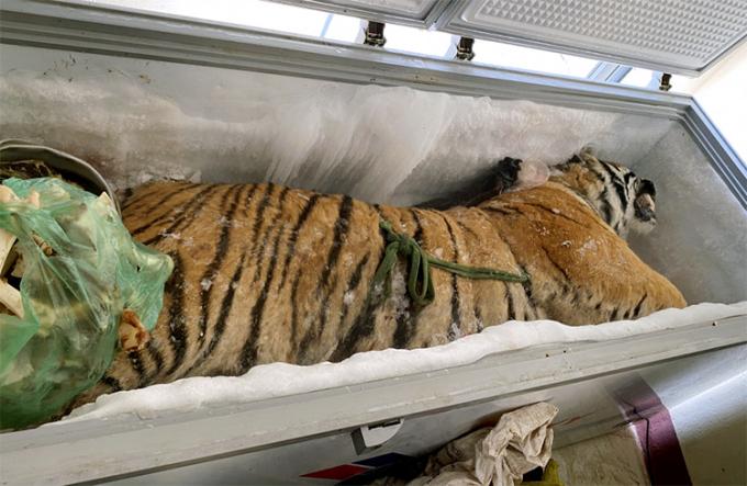 Cất giữ xác hổ bị xử phạt bao nhiêu năm tù giam theo quy định?